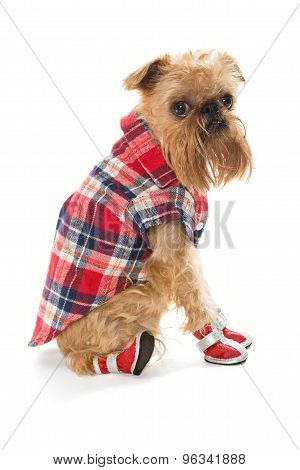 Dog In Red  Shoes And Shirt