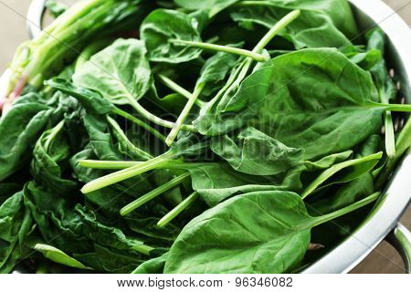 Fresh spinach leaves in colander, closeup