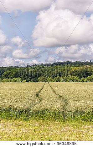 Wheat Field And Tractor Tracks