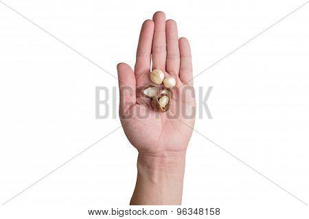 Left Hands Holding Macadamia Nuts