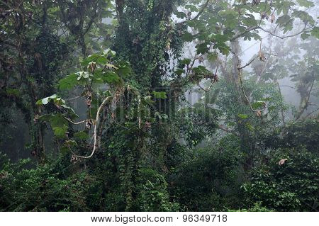 Amazing Tropical Plants Covering Trees In Rainforest - View Through Fog