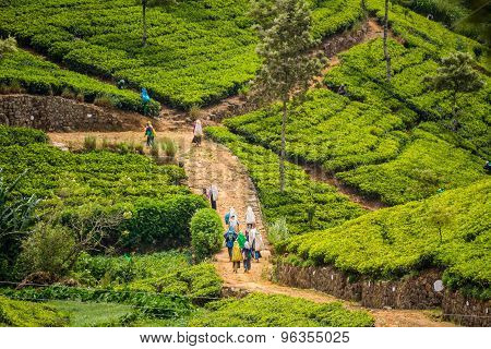 Visiting The Lipton Tea Plantation In Haputale Sri Lanka
