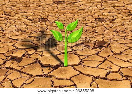 Survival plant