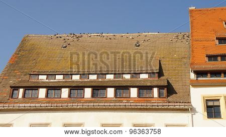 City pigeons on a roof
