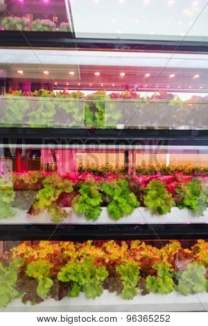 Hydroponics method of growing plant