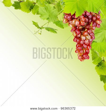 Frame of grape branches with green leaves, on light background