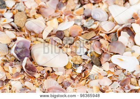 Shell Background On A Sand Beach