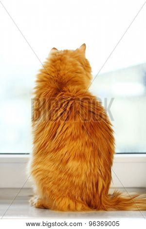 Back of red cat sitting on windowsill background