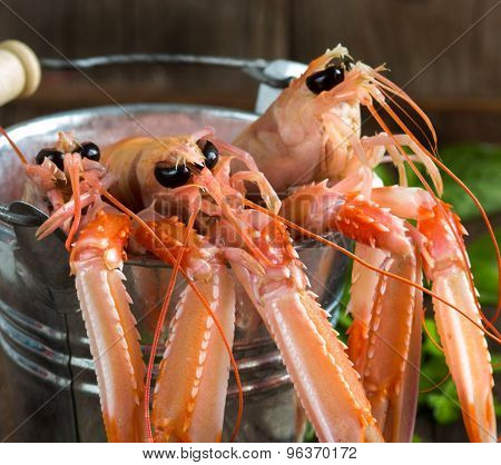 Raw Langoustine In A Bucket