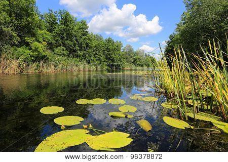 Nice summer landscape on lake