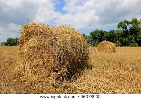 crop field with hay rolls in summer day