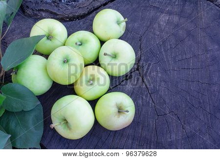 Green Apples On A Cracked Stump