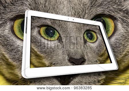 Cat in tablet