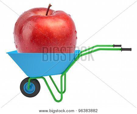 Apple in hand-barrow