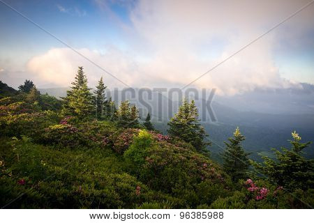 Roan Mountain Spring Rhododenron Blooms 10