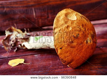 orange-cup boletus fresh on the wooden country bench