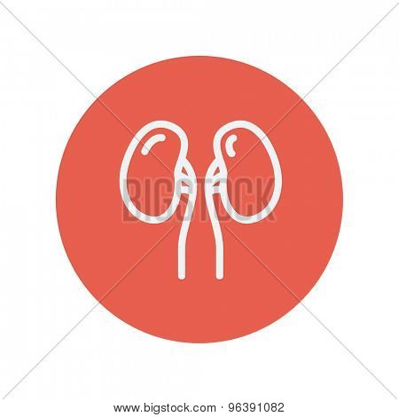 Human kidney  thin line icon for web and mobile minimalistic flat design. Vector white icon inside the red circle.