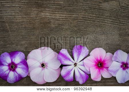 Row Pf Flowers Phloxes On A Wooden Background, Closeup Top View With Copy Space For Your Congratulat