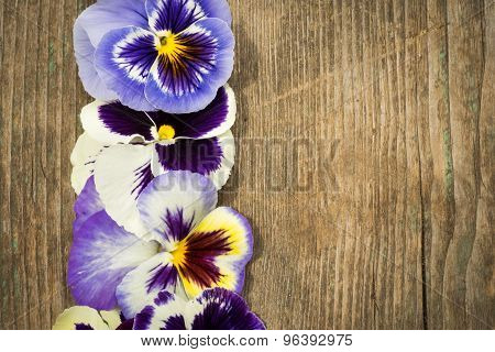 Row Of Bright Summer Viola Tricolor Flowers Top View On Wooden Background