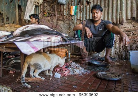 MUMBAI, INDIA - 11 JANUARY 2015: Cat eats fish leftovers while vendor looks and waits for customers. Despite this, hygiene standards have risen in India.