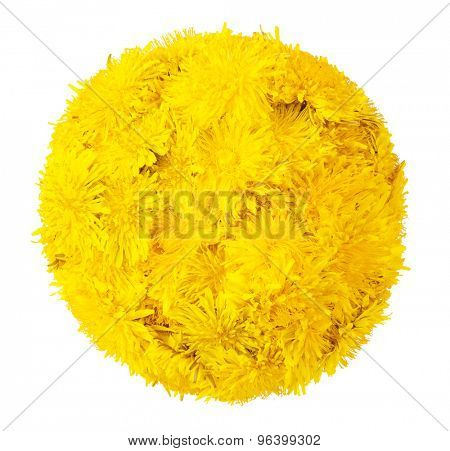 Ball of dandelions. isolated on a white background