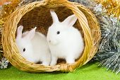 picture of tawdry  - Two white rabbits in basket against tinsel - JPG
