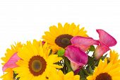 picture of calla  - bouquet of   sunflowers and callas  close up isolated on white background - JPG