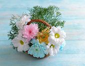 picture of chrysanthemum  - Colorful chrysanthemum in basket on wooden background - JPG