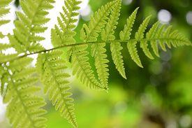 foto of fern  - Beautyful leaf of fern is close - JPG