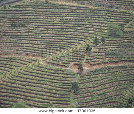 detalhes de agricultura