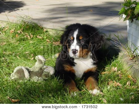 Cute Puppy With Its Frog In The Grass