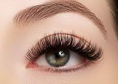 Beautiful Female Eye With Extreme Long Eyelashes, Black Liner Makeup. Perfect Make-up, Long Lashes. poster