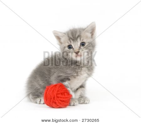 Gray Kitten And Red Yarn