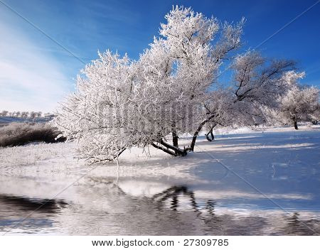 winter trees on snow