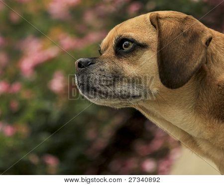 Wistful Dog in a Garden