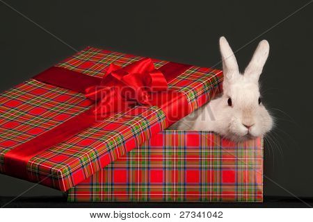 Image of fluffy rabbit in gift box with red bow