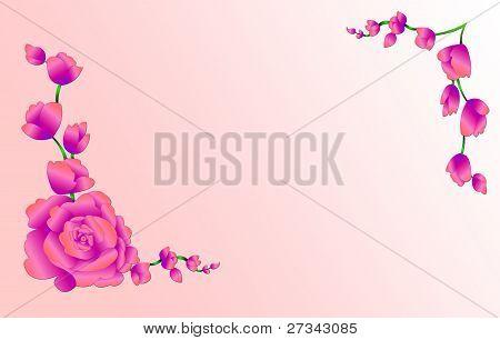 Gentile Roses