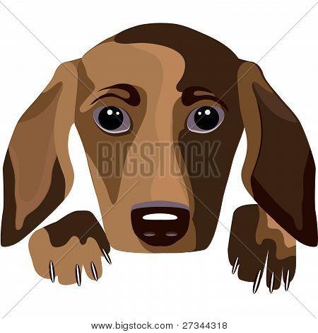 portrait of dog on white background