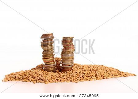 Pile Of Money On Harvesting Corn
