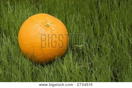 Orange On Grass