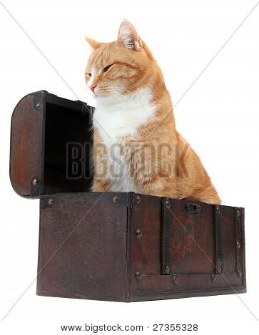 Chilling Tomcat In Treasure Chest