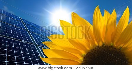 Solar panels and Sunflower against a sunny sky