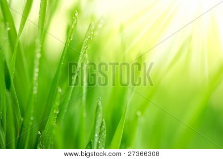 Fresh green grass with water droplet in sunshine(Shallow Dof)