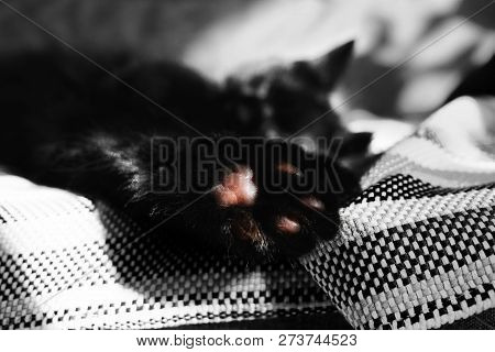 poster of Paw With Pads Close-up Against The Backdrop Of A Sleeping Cat On The Wicker Blanket. One Color Detai