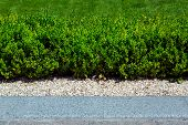Green Hedge Of Deciduous Evergreen Bushes Strewn With Gravel Between The Bushes And The Pedestrian P poster