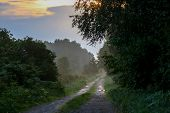 Rural Landscape With Empty Countryside Dirt Wet Road. Dirt Road Leading Through Foggy Forest In Keme poster