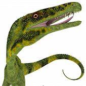 Juravenator Dinosaur Head 3d Illustration - Juravenator Was A Carnivorous Theropod Dinosaur That Liv poster