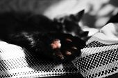 Paw With Pads Close-up Against The Backdrop Of A Sleeping Cat On The Wicker Blanket. One Color Detai poster
