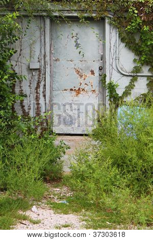 Old door with growth all around it