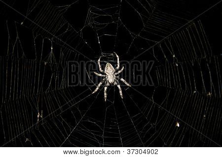 Spider In The Center Of A Web